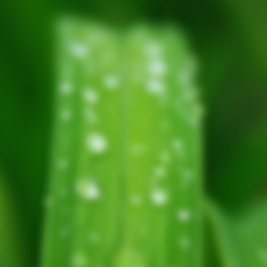 blurred image of dew on blade of grass daily meditation